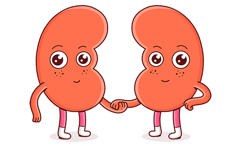 2 red kidney caricatures holding hands